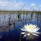 Everglades_Photo_2_Fla_Coop_Unit