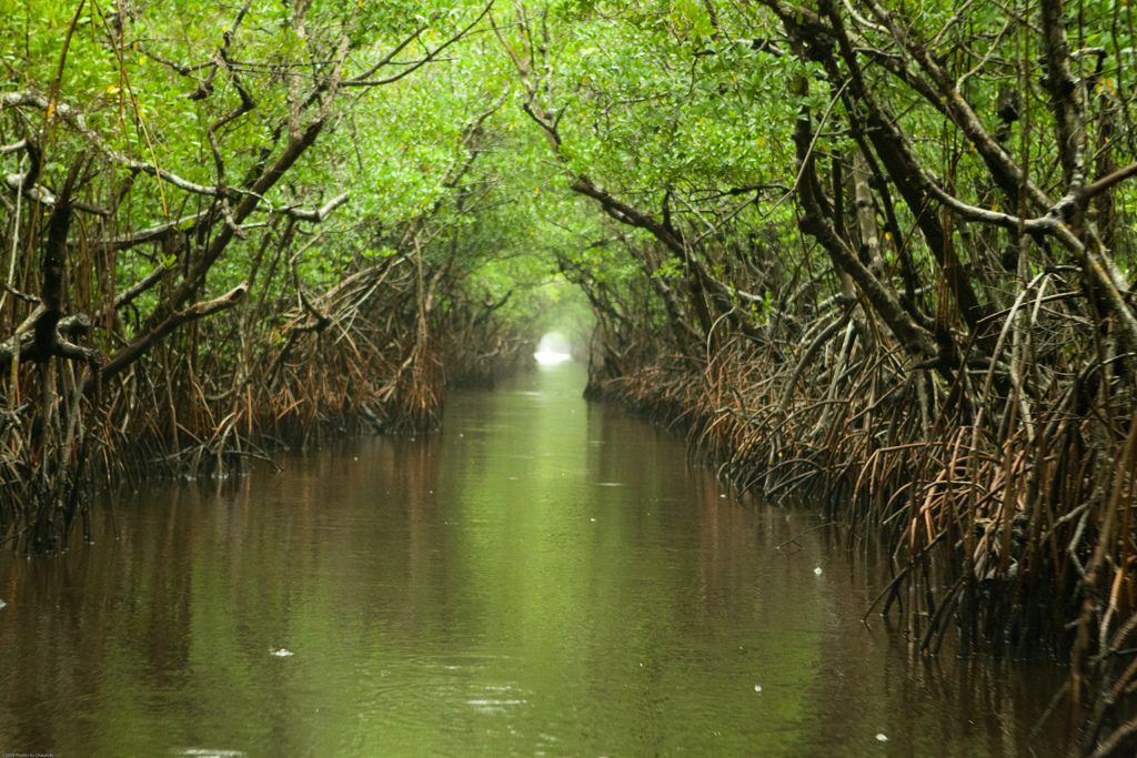 Mangrove Forest - Airboat Rides Fort Lauderdale - Holiday Season