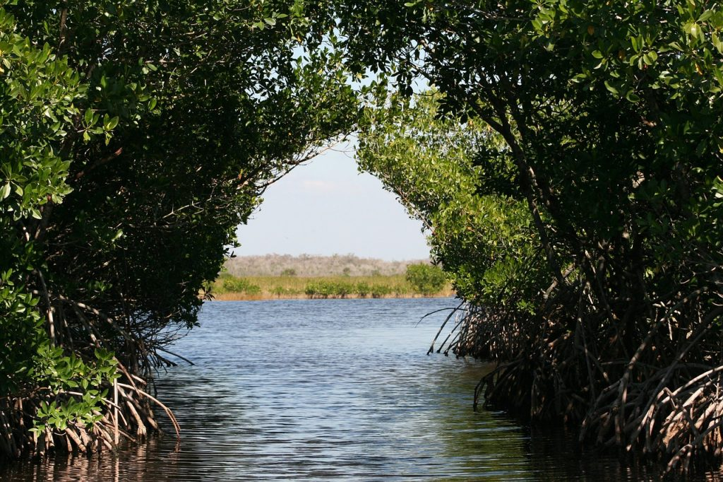 Mangroves - Airboat Rides Fort Lauderdale