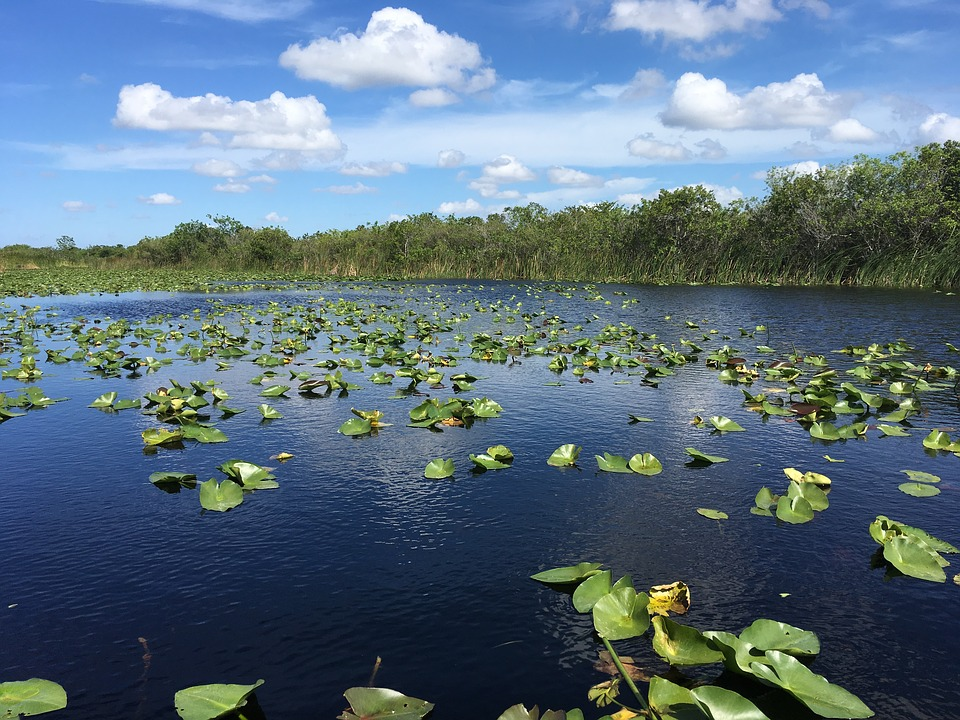 Florida Everglades - Airboat Rides Fort Lauderdale
