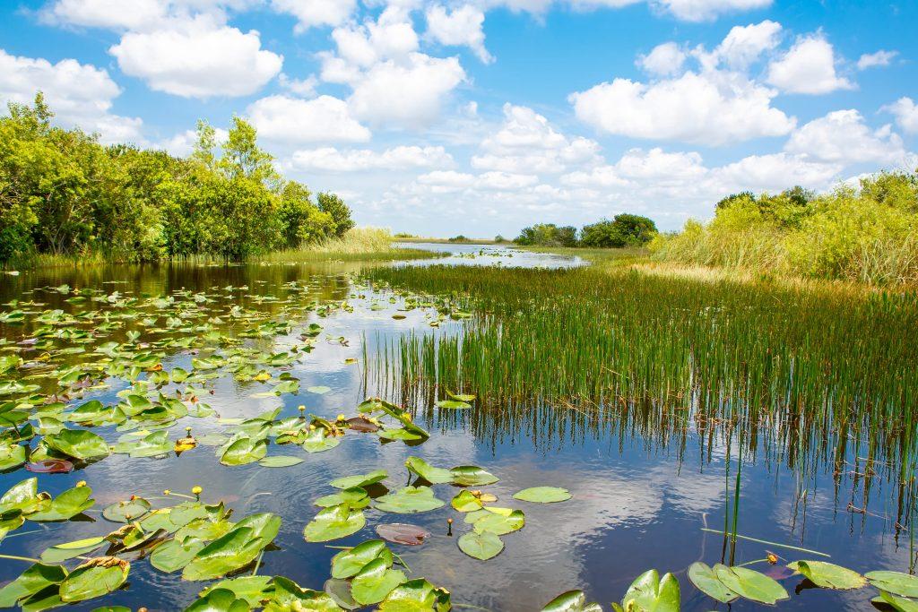 The River Of Grass Everglades